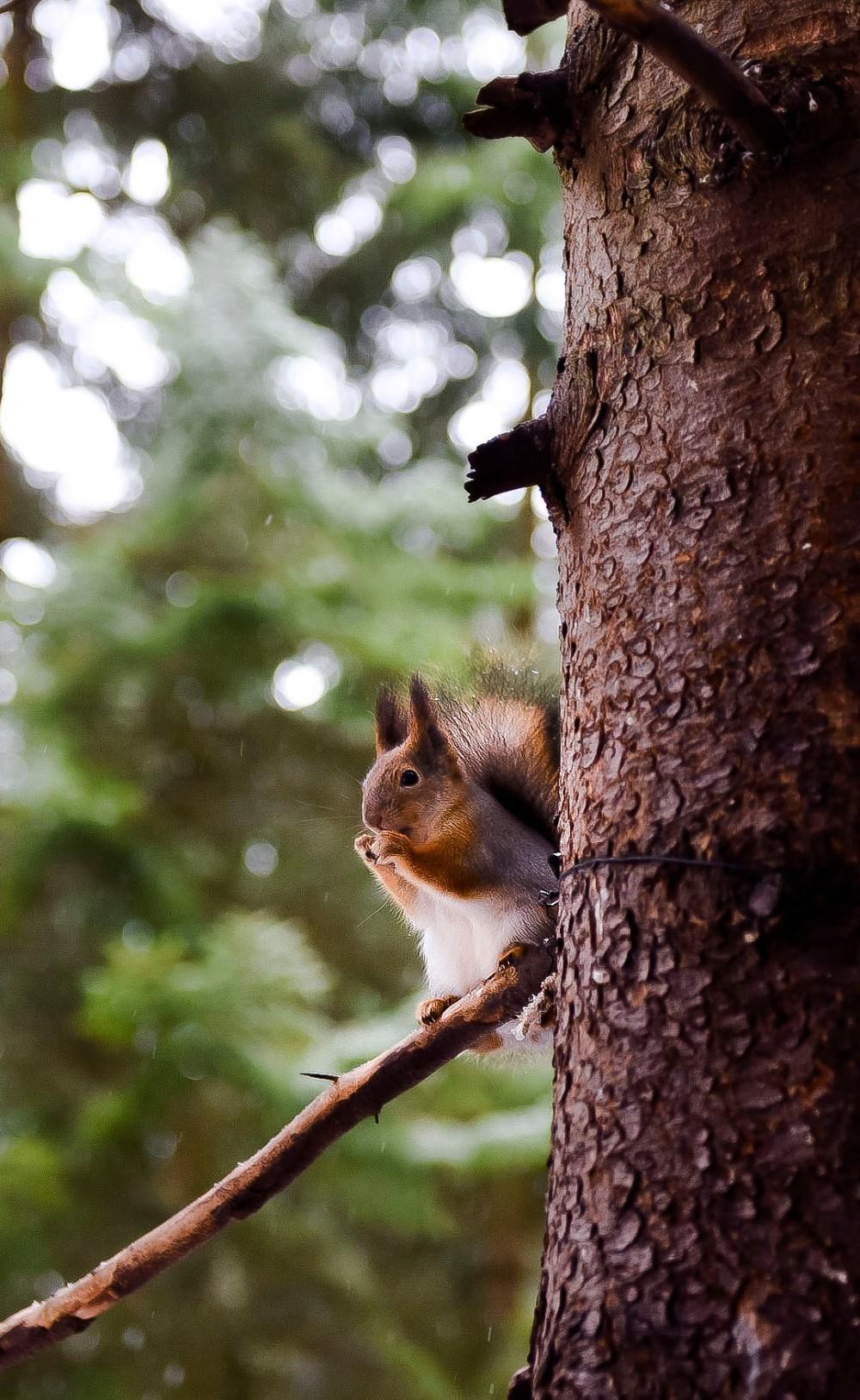 Seurasaaressa talviretkellä oravia bongaamassa